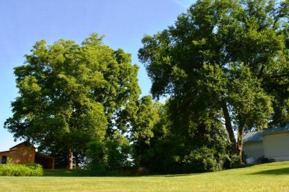 trees yard