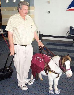 service miniature horse