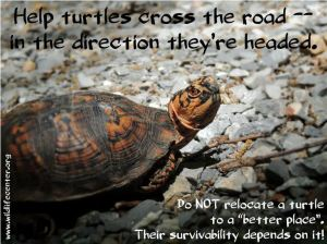 help turtles cross the road