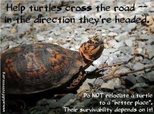help turtles cross the road