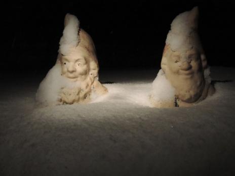 gnome beard 9 pm