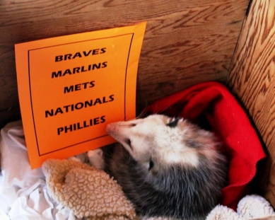 Phebe picks the Phillies 2016