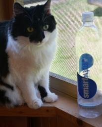 Stevie Drinks Smart Water