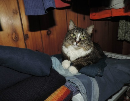 mookie-in-the-closet